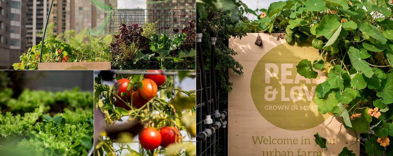 Peas&Love, la nouvelle génération de fermes urbaines, annonce son arrivée à Paris