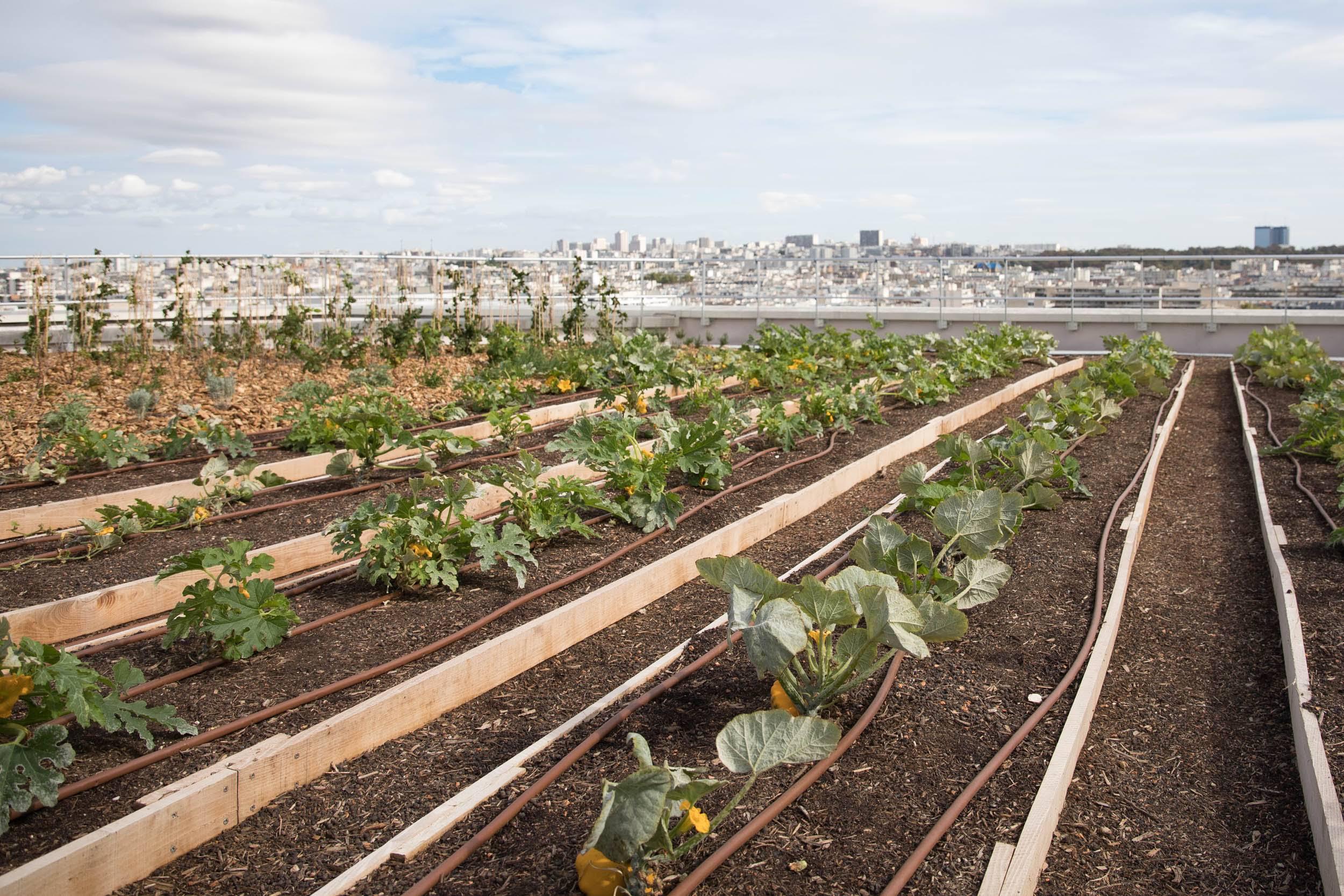 La Capitale cultive ses toits