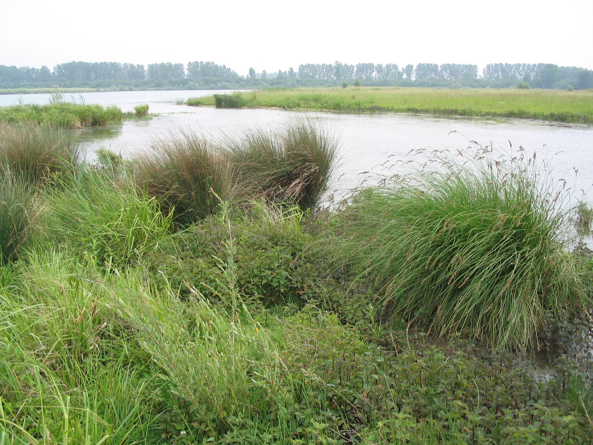 Les carrières en recherche de biodiversité en Seine-et-Marne