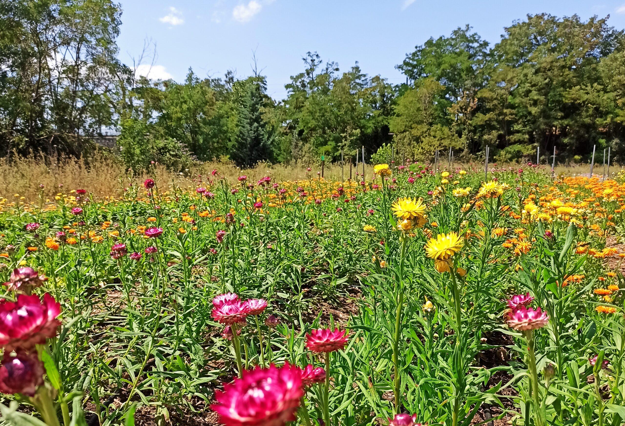 Des fleurs et de la bonne terre sur Lil'Ô